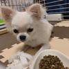 【悲報】宮本佳林さん、飼い猫だけでなく飼い犬にもナメられてる模様