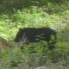 熊さんが来た! &セミさん観察日記?
