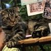 人生初の猫カフェ!オモチャで遊べる、人懐っこいネコたちが可愛い