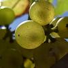 旬の素材にひと手間かけて ―― 前回のお題「秋の味覚」ふりかえり