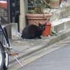 10月23日 谷中の路地裏で 沢山の猫さまに会う