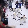 旭山動物園 冬の動物たち
