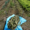 2014'秋野菜播種