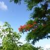 沖縄へ(南部戦跡を訪ねて)