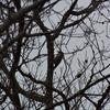ジィちゃんと探鳥・丹沢湖&座間谷戸山公園の野鳥/2019-1-20