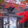 京都・南丹 - 霧中に佇む秋の摩気神社