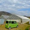 3月から珍しいトロピカルプランツ苗の販売が始まります♫ <その1>