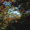 三渓園の紅葉2017、そして〈La Ohana(ラ・オハナ)〉でチーズバーガー。