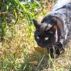 黒い子猫・北原白秋:黒猫は見た!無邪気な子猫が暴いた秘密のできごと