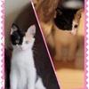 【41日目】【写真】1.1kg。猫成長の早さビフォーアフター