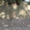「徳島中央公園」の写真撮影おすすめ時期