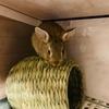 ウサギのちまき今日の1枚『すずカステラ』