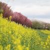 お花見ミニツーリング(桂川鉄橋あたり)