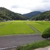 稲刈り前の草刈り