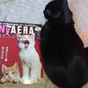 猫の腎臓病!新薬や特効薬はあるの?