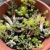 【園芸】3カ月多肉植物とハーブ