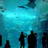 「海獣の子供」を語るには言語力不足なのでその日のうちに新江ノ島水族館に行ってきた