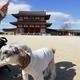【ペットとお出かけ】奈良県奈良市:平城宮跡をワンコと散策 | 朱雀門の大きさに圧倒されました!