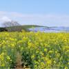 春のおでかけのすすめ 〜ひたち海浜公園ネモフィラの丘〜
