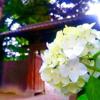 【東京】六義園で紫陽花を見てきました