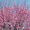 庭の花 『春・だ~い好き!』