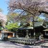 桜満開の前鳥神社