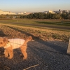 夕日の中を散歩