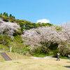 観音ヶ池へ桜を見に行きました