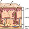 皮膚とビタミン