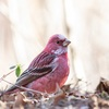 神戸、六甲山周辺で撮影したい野鳥。ZooPickerリンク。