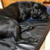 暑いからこそ心地良い睡眠を・・・快適なドッグマット