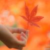 紅葉の撮り方をまとめてみました。【演出編】