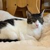 猫ベッドが汚れたらどうしてます?洗濯事情について調べてみました!