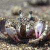 【動画】「蟹の惑星」の住人たち