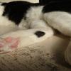 今日の黒猫モモ&白黒猫ナナの動画ー779