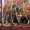 【祇王寺】苔絨毯に赤く染まる紅葉絶景!悲恋の歴史もたっぷり解説