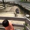 【コスパ最高】大阪 池田の五月山公園いいですよ