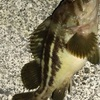 みんなの北海道釣り情報【小樽高島漁港】小樽の高島漁港は釣れるの?高島漁港で釣りをしている人に調査してみた!