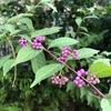 紫式部~花と歌と旅~