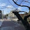 景観色彩ファイル026/また別な桜の話題、福岡市では桜並木消滅しています