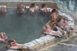 温泉を楽しむニホンザルたち! 函館市熱帯植物園で南国の植物と「サル山温泉」を楽しむ。