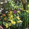 バラも黄菊も 咲いて秋の庭、野良猫問題