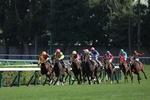 札幌競馬場で初めての競馬鑑賞。迫力あるレースに大興奮!