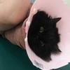 神奈川県 三ツ池動物病院での鍼灸治療