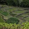 カウアイ島:リマフリガーデン