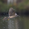 Goshawk Part2