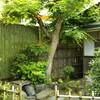 心斉庵の庭師!主人です。