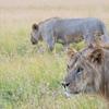 野生動物の生き方に学ぶ超少食生活!