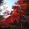 紅葉2010