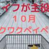 【10月ワクワクペイペイ】スーパーのライフで10%還元キャンペーン!!9月に続いて主婦の味方です!